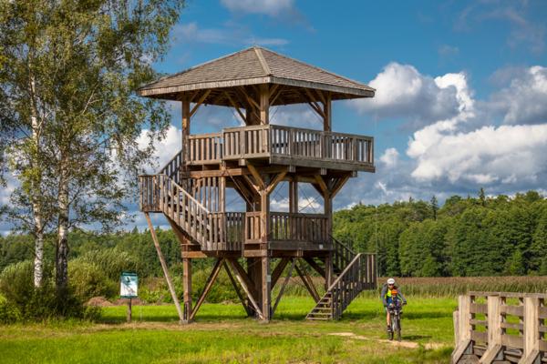 Białowieski Park Narodowy wieża widokowa