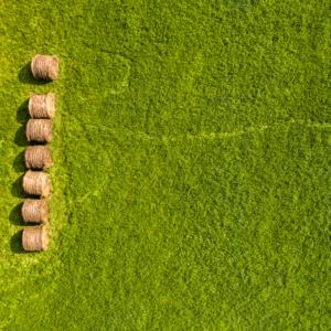 Podlasie z lotu ptaka, pastwisko z drona, Maciej Nowakowski