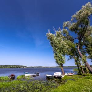 krzywe drzewa w Grajewie nad jeziorem Toczyłowo, Maciej Nowakowski