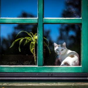 kot w oknie, Maciej Nowakowski