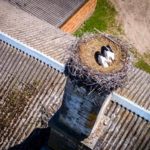 bocianie gniazdo z lotu ptaka, Maciej Nowakowski