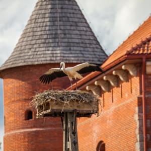 zamek w Tykocinie i startujący bocian, Maciej Nowakowski