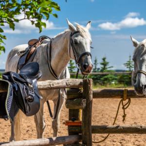 konie w udrynie, Maciej Nowakowski