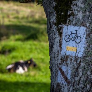 Ścieżki rowerowe na Suwalszczyźnie i w Wodziłkach, Maciej Nowakowski
